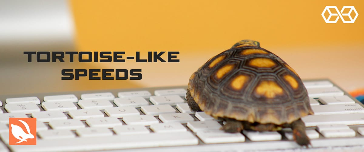 Tortoise-Like Speeds - Source: Shutterstock.com